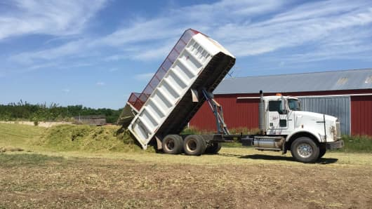 Grain truck offloads freshly cut wheat at Sawyer Land & Cattle.