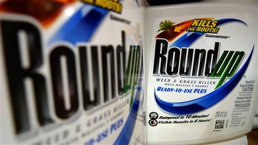 FILE - In this June 28, 2011 file photo, bottles of Roundup herbicide, a product of Monsanto, are displayed on a store shelf, in St. Louis. (AP Photo/Jeff Roberson, File)
