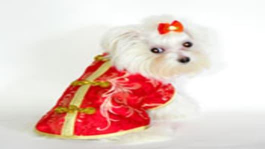 dog_w_kimono.jpg