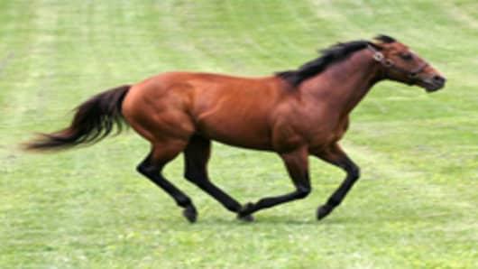 kentucky_horse_AP.jpg
