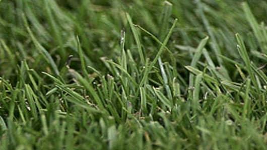 grass_AP.jpg