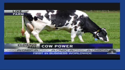 Cow Power