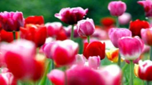 flowers_tulips_200.jpg