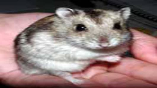 Trexima Study Update: No Hamsters Harmed
