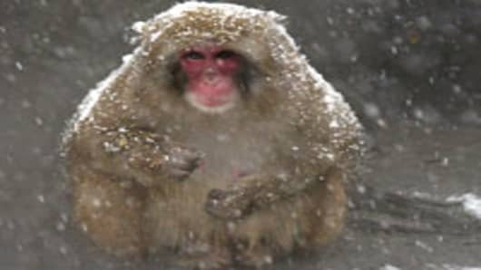 Snow monkey sits in snow storm, Central Park Zoo, New York (AP)