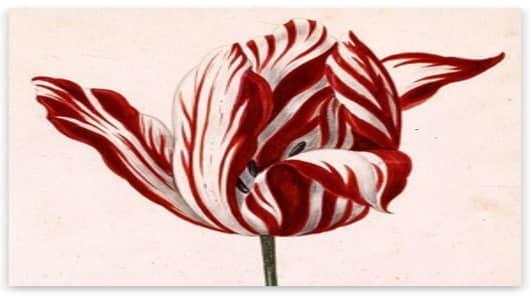 Semper_Augustus_Tulip_17th_.jpg