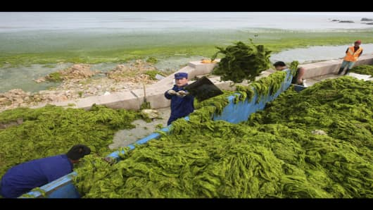 Chinese soldiers remove blue green algae from a beach in Qingdao, eastern China, Wednesday, July 2, 2008. A little over a month before the start of the 2008 Olympic Games the venue for the sailing events in Qingdao has been invaded by a forest of blue green algae. City officials say they'll need at least two weeks to clear coastal waters, mobilizing 10,000 workers aboard 1,000 boats. (AP Photo/Ng Han Guan)