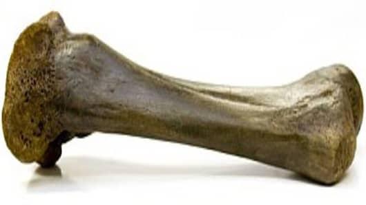 Wooly Mammoth Femur