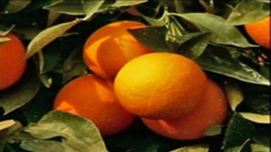 orange_tree_200x150.jpg