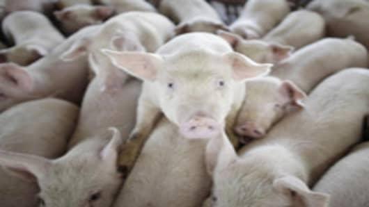 pig_farm2.jpg