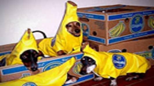 halloween_dog_banana_140.jpg