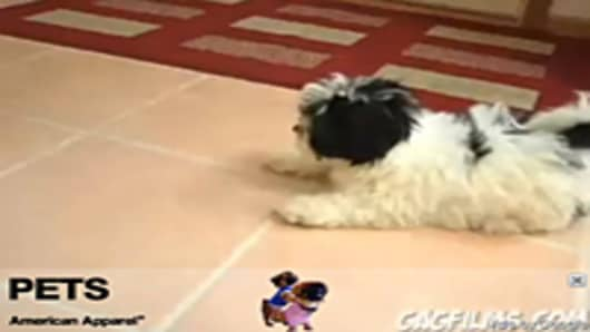 American Apparel overlay ad in Puppy vs. Mirror video
