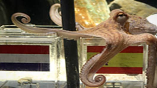 An octopus named Paul sits on a box decorated with a Spanish flag and a shell inside on July 9, 2010 at the Sea Life aquarium in Oberhausen, western Germany. Paul's task is to decide in favour of one of the shells hidden in boxes with the flags of the Netherlands and Spain to act thus as oracle for the upcoming final match of the FIFA Football World Cup between the two countries on July 11, 2010. Paul, the 'psychic' octopus, who had predicted well the result of six German matches earlier in the