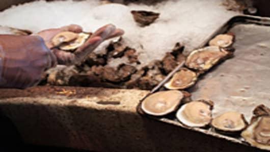 Shucking Louisiana oysters