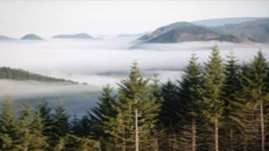 Timber investment management organizations own large tracts of timberland like this evergreen forest in Snoqualmie, Washington.
