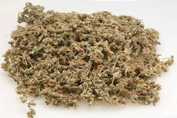 """Can be used for the treatment of depression and nausea. Named in honor of noted cannabis researcher and author Dr. Lester Grinspoon, a Harvard Medical School professor and advocate of marijuana for over 40 years. """"Long-lasting and very cerebral, this is a true connoisseur's strain,"""" says Danko."""