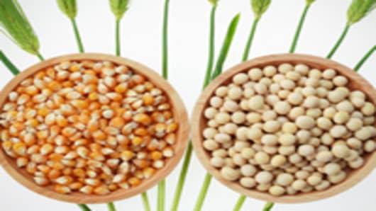 corn kernels and soya bean