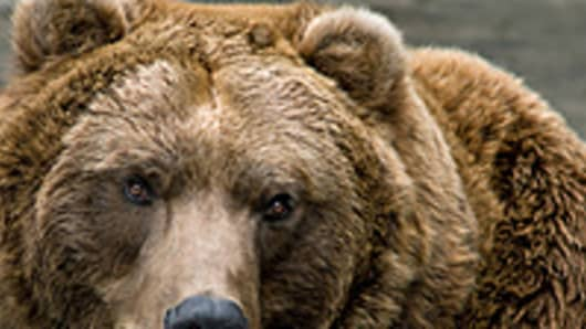 Behind the Bear Calls on LinkedIn and Green Mountain Coffee