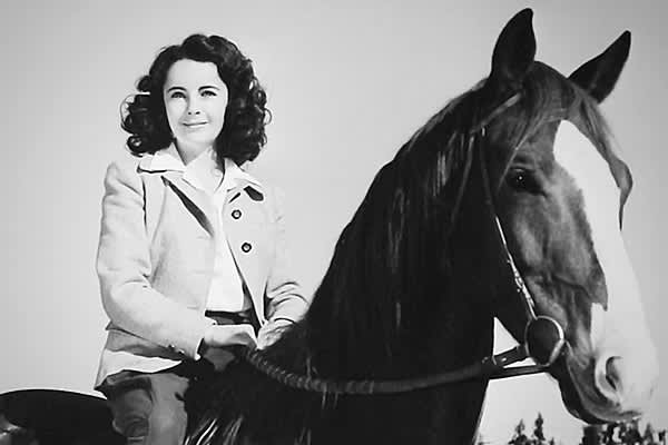 "The 1944 film  is widely considered Elizabeth Taylor's breakout film. The story of a 12-year-old girl who rides a horse named ""Pie"" to victory, it was a big hit, earning $4 million in the U.S. alone, or more than $50 million today. Although her salary for the film was $100 a week, Taylor, who had also starred in Lassie Come Home, recognized the important role that the film had played in career, and she was later quoted as saying, ""Some of my best leading men have been dogs and horses."""