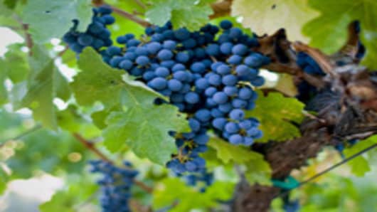 vineyard_grapes_200.jpg