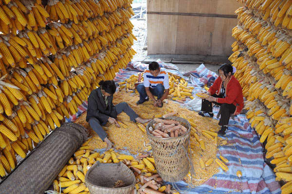 China is the world's second largest consumer of corn and demand continues to increase. It is also the world's second largest producer of corn behind the U.S., which may be surprising for a country whose main staple is rice.Indeed, most corn in China isn't consumed by humans at all—75 percent of its corn consumption is used for animal feed. Corn consumption has grown consistently, rising nearly 3 percent each year for the past decade.The country's corn imports will reach a record 5 million metric
