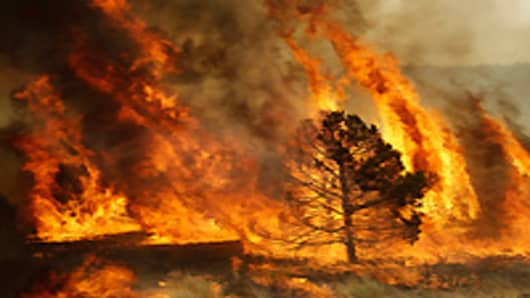 A forest burns during a backburn operation to fight the Wallow Firen in Nutrioso, Arizona.