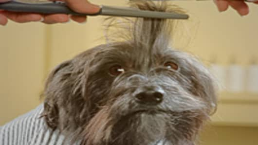 dog_haircut_200.jpg