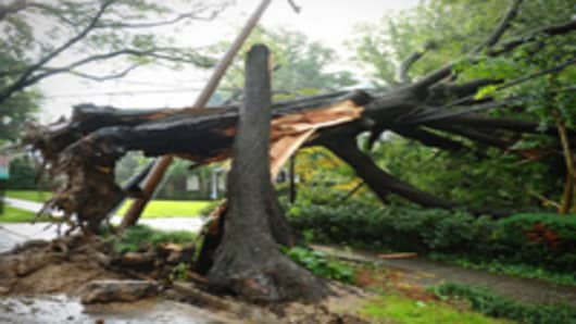 A fallen tree which also knocked over a power line is seen on Loughboro Road after Hurricane Irene swept through the area.