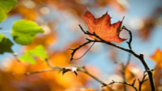trees_leaves_autumn_200.jpg