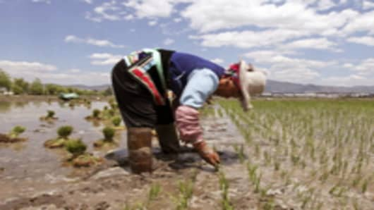 A farmer plants rice in Baishixi, Yunnan province, China.