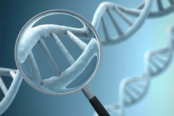 Scientists began to sequence some DNA molecules in the late 1970s. Then, in 1990, the U.S. government organized the effort to map the human genome. This effort to identify all the 20,000 to 25,000 genes in human DNA was completed in 2003. The achievement led to great advancements in the research of and treatment of genetic diseases.