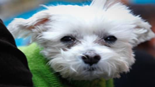 dog-puppy-200.jpg