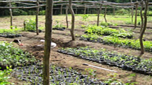 tree-nursery-reforestation-200.jpg