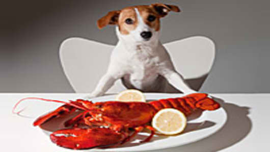 dog-eating-lobster-200.jpg