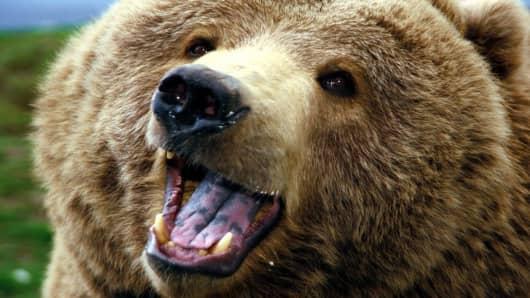 Final_Bear_Image.jpg