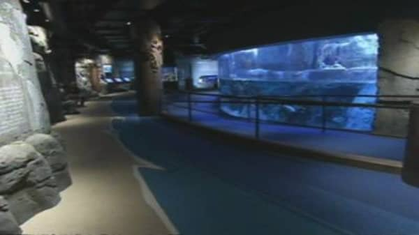 BP Sponsors Sea Otter Exhibit