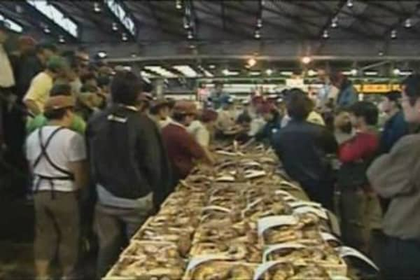 Matsutake Being Auctioned