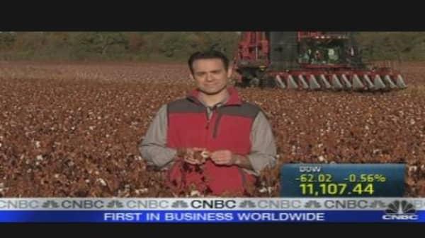 Cotton Price Wrinkles