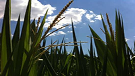 corn-Ill-3-200.jpg