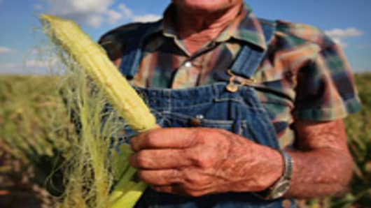 Marion Kujawa looks over an ear of corn picked from one of his fields on July 16, 2012 near Ashley, Illinois. The field from which the corn was picked has yielded more than 180 bushels of corn per acre in past years, Kujawa expects to get less than 15 bushels per acre from this year's drought-damaged crop.