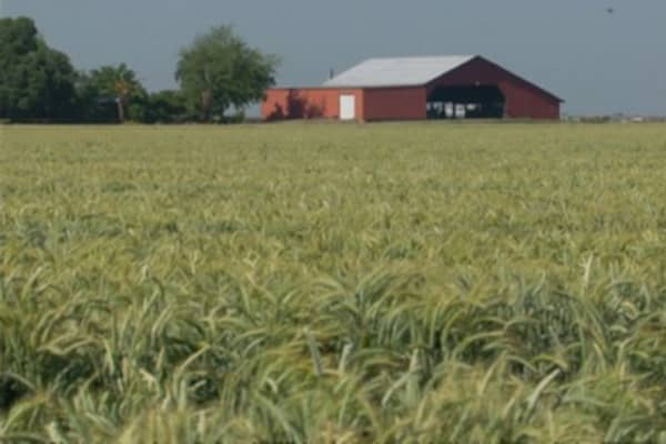 Federal Crop Insurance Fraud Costs Millions