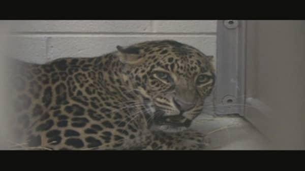 Dangerous Trade: Exotic Animals