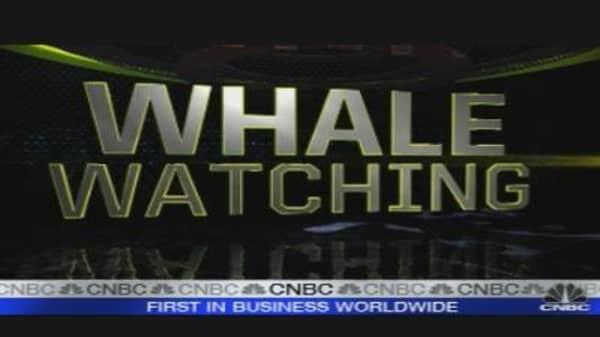Whale Watching & Flash Crash Antidote