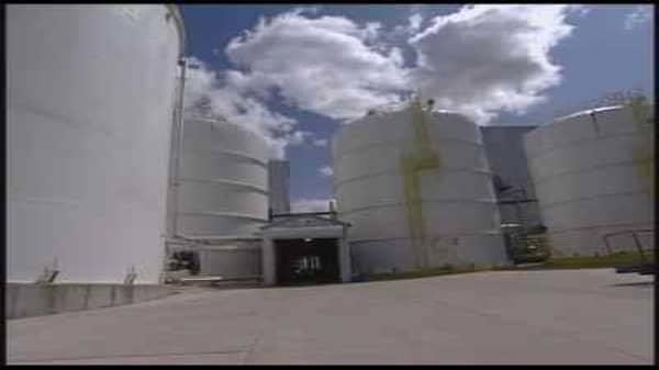 Ethanol Survivors