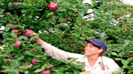 'Bitter Harvest' Watch: Washington Has Its Best Year Ever