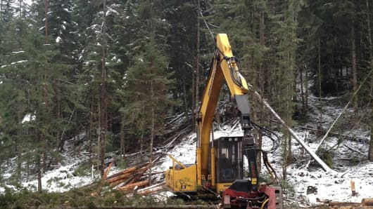 A processor machine removes branches from felled trees in an Idaho forest.