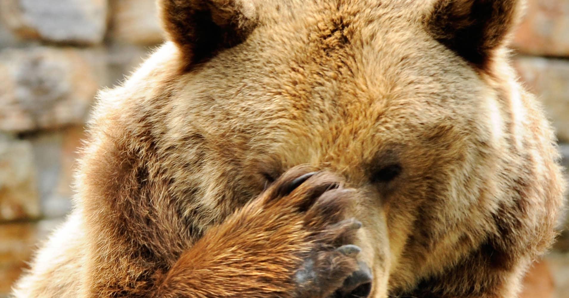 bear nasty
