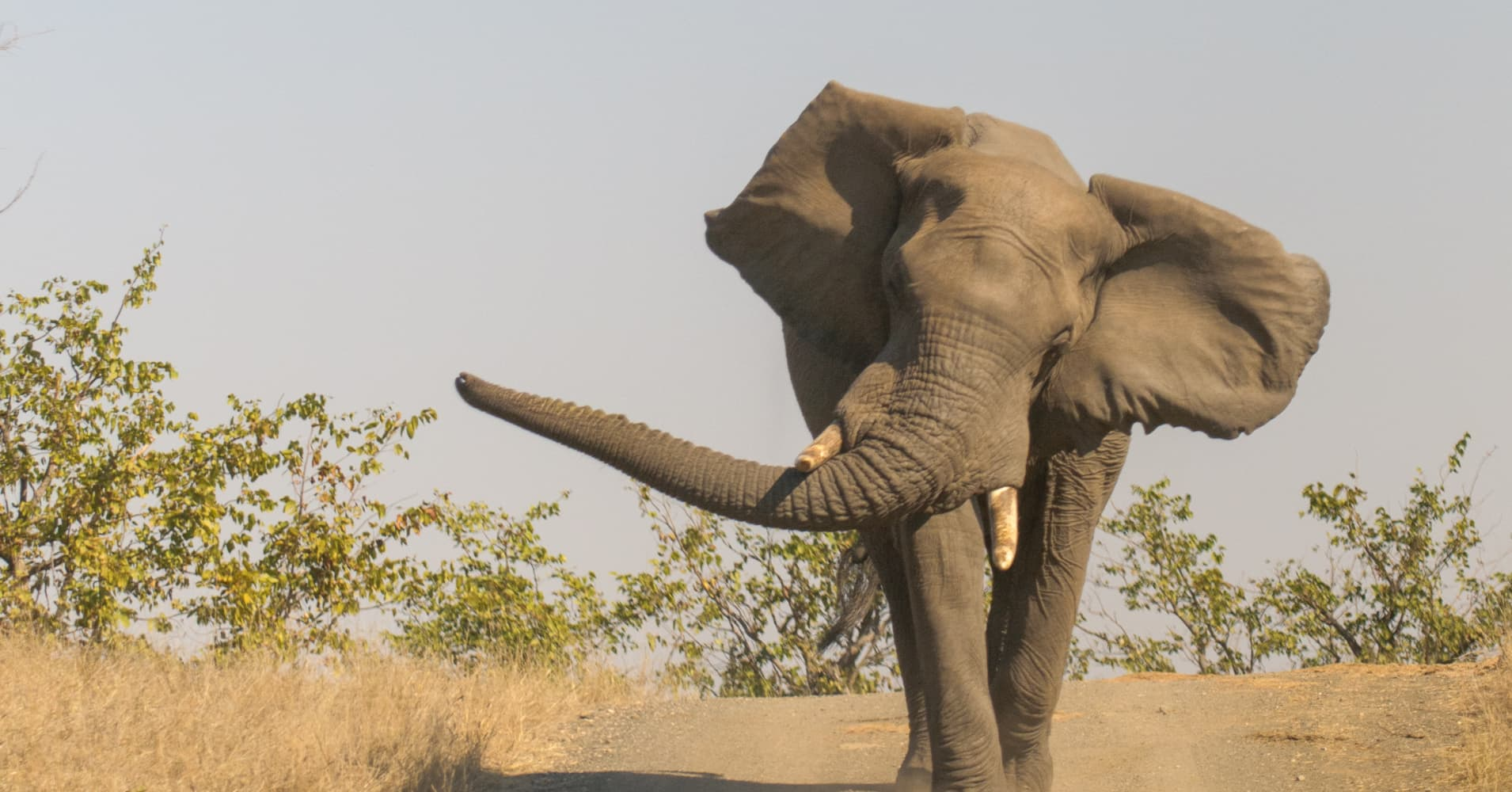 Cramer Horses And Elephants Plundering Stocks