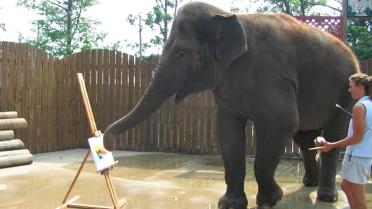 Surapa the elephant paints at the Buffalo Zoo.