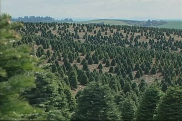 Christmas Tree Growers Not Happy